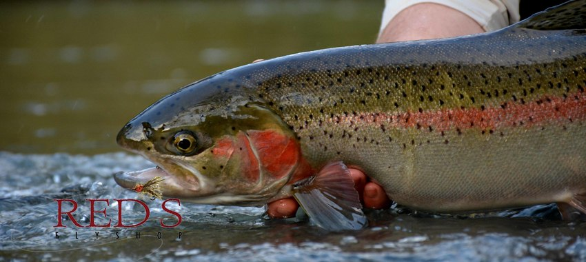 Architecture of the Spey Cast - Tight Loops for Greater Success