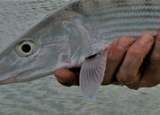 UPDATED - Episodes 1 and 2 - The Bonefish Virgin Fishes Ascension Bay