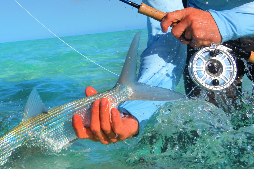 bonefish release on christmas island