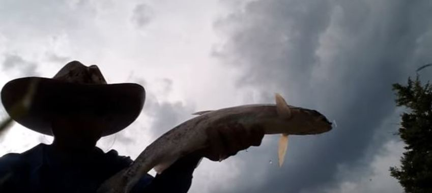 A Dirty Trick for Catching Trophy Trout