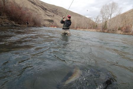 Tips for Fishing the Skwala hatch on the Yakima River