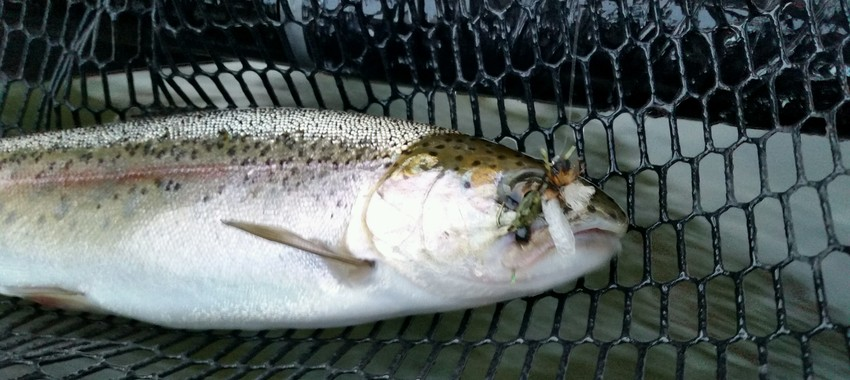 Fishing Report, Drought Info, and a Fly