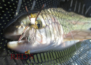 Hot Skwala Dry Fly - Solitude Bullethead Skwala