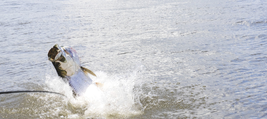 ISO - 1 More Angler for Big Tarpon in Costa Rica!