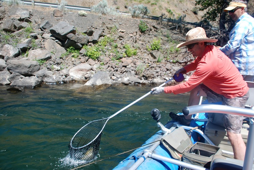 Joe Rotter netting a Cutthroat Trout on the Naches River