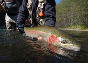 Klickitat River Steelhead Dates Available! - Yakima River Fishing Report