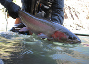 Klickitat River Steelhead Dates Available