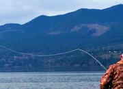Sea-Run Cutthroat Fly Fishing on Hood Canal - The Beach QuadFecta