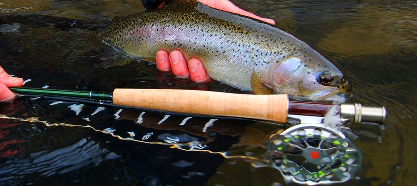 Super Deal! - Clearance Sale on Sage VXP Fly Rods
