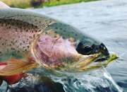 Top Trout Spey Rods