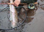 Upcoming Spey Casting Classes
