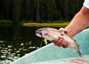 Upper Kittitas County Fly Fishing Courses