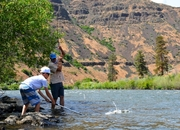 Yakima River Summer Stonefly Hatch - UPDATED